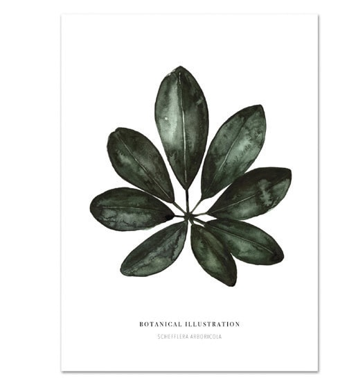 Botanische-posters-kaarten-botanisch-industrieel-interieur-Leo_La_Douce_edition_summer_18-22