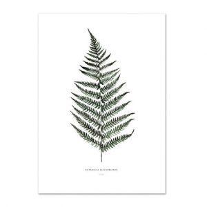 Botanische-posters-kaarten-botanisch-industrieel-interieur-Leo_La_Douce_edition_summer_18-32