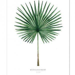 Botanische-posters-kaarten-botanisch-industrieel-interieur-Leo_La_Douce_edition_summer_Fan-Palm-18-31