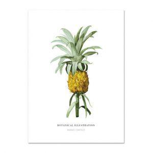 Botanische-posters-kaarten-botanisch-industrieel-interieur-ananas-Leo_La_Douce_edition_summer_18-27