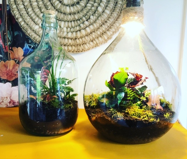 Groen DIY Ecosysteem botanisch interieur
