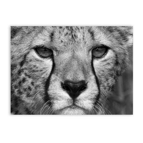 Zwart wit postkaart wanddecoratie cheetakaart